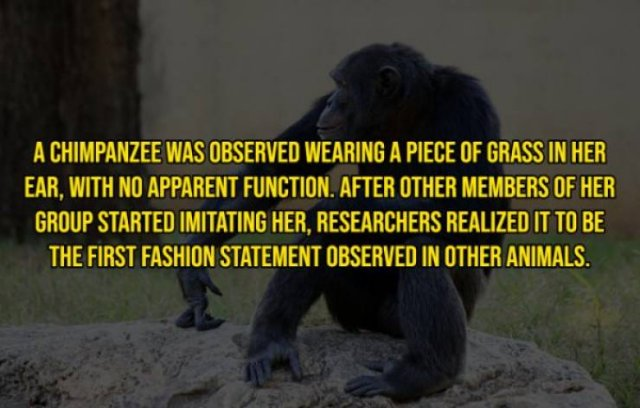Intriguing Facts (20 pics)