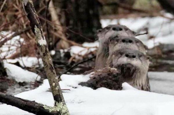 Funny Wildlife Photography (34 pics)