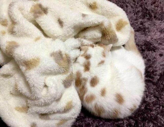 Accidental Camouflage (45 pics)