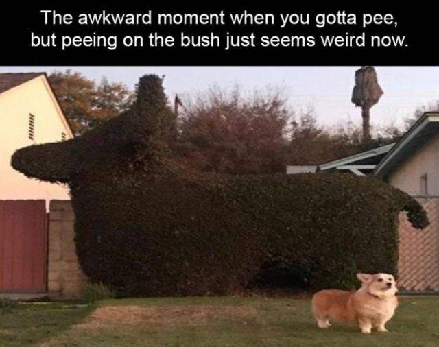 Random Funny Memes (75 pics)