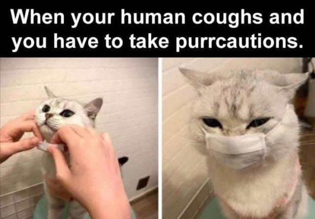 Random Funny Memes (62 pics)