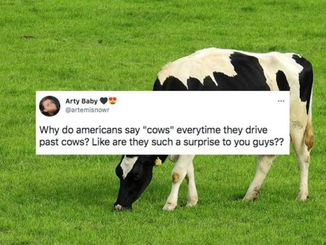Why Do Americans Always Say Such things? (28 pics)