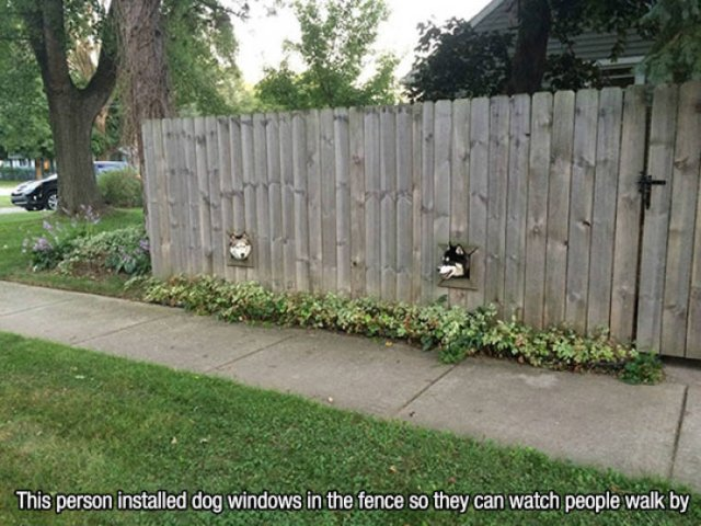 Wholesome Stories (56 pics)