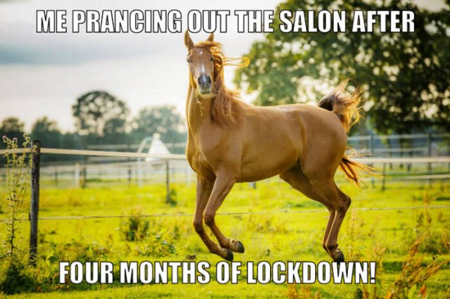 Quarantine Pet Memes (16 pics)