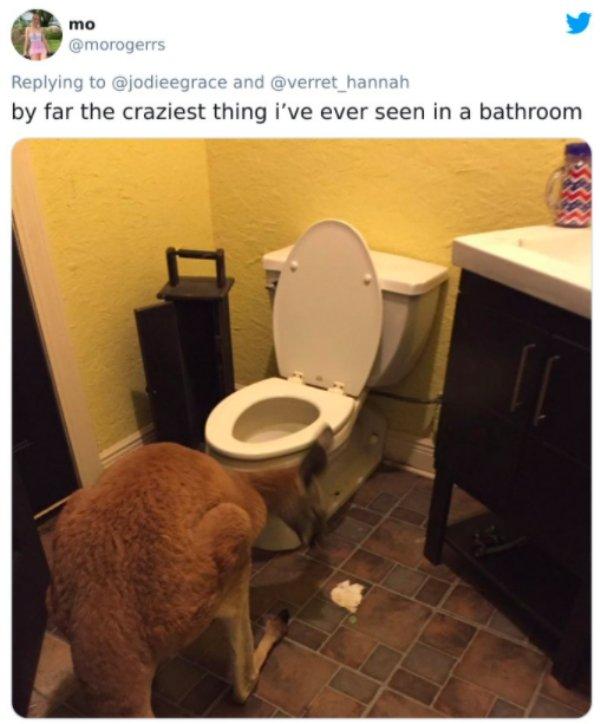 Strange Things In Men Bathrooms (27 pics)