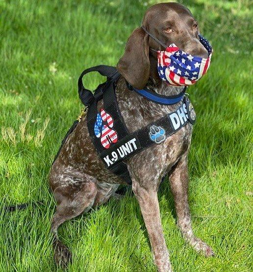TSA Dog Finds (39 pics)