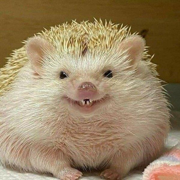 Funny And Creepy Animals (34 pics)