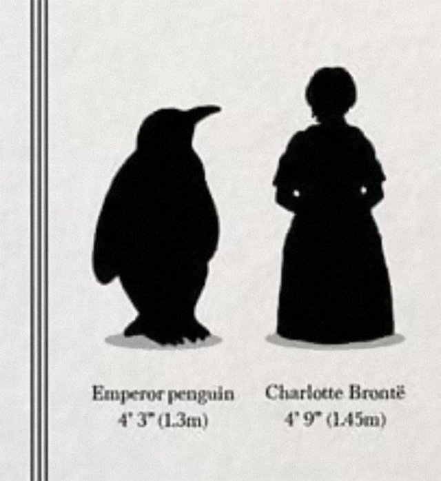Strange And Funny Science Book Pages (44 pics)
