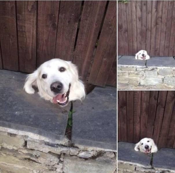 Funny Pets (18 pics)