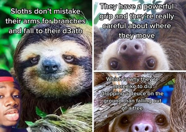 Animal Myths Were Shattered (25 pics)