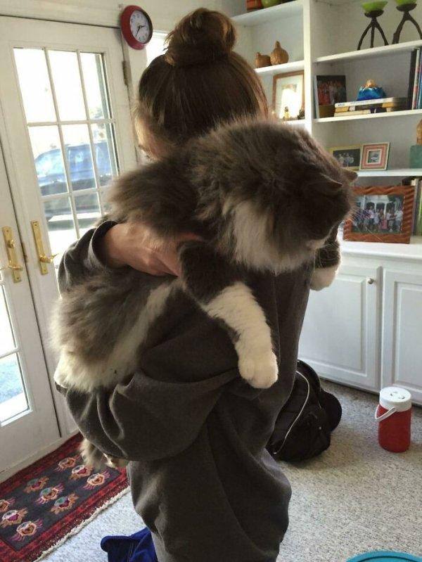 Giant Cats (31 pics)