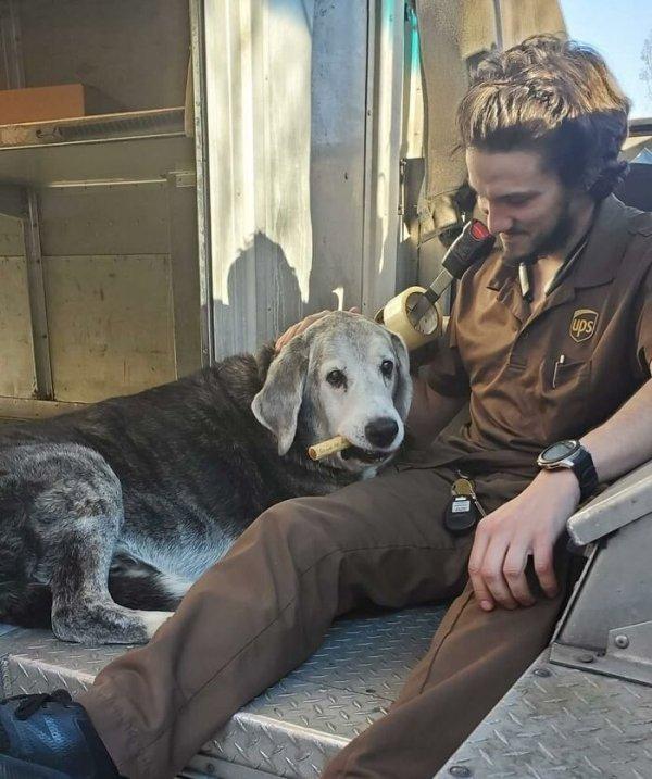 UPS Dogs (35 pics)