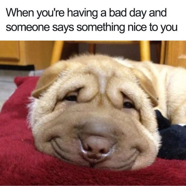 Dog Memes And Pictures (27 pics)