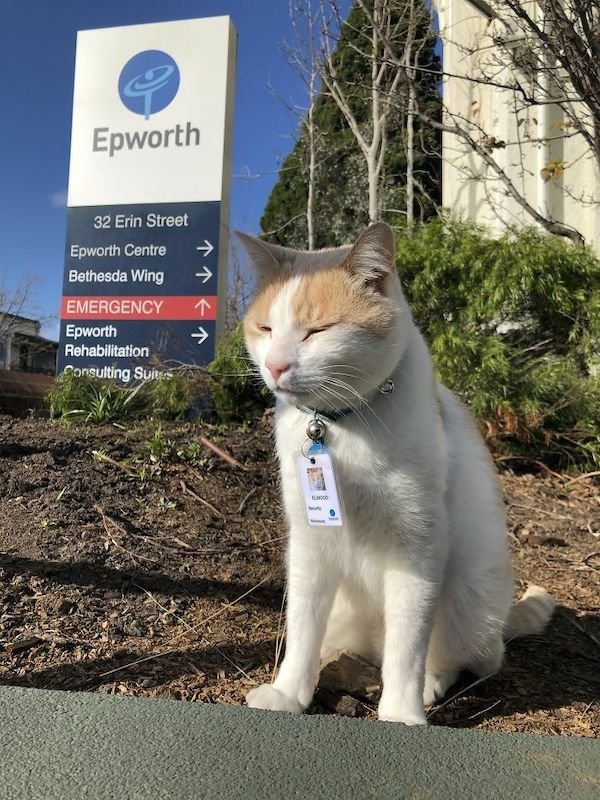 Cats With Jobs (32 pics)