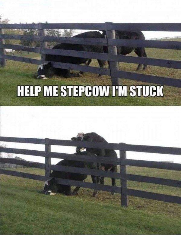 Memes For Grown-Ups (30 pics)