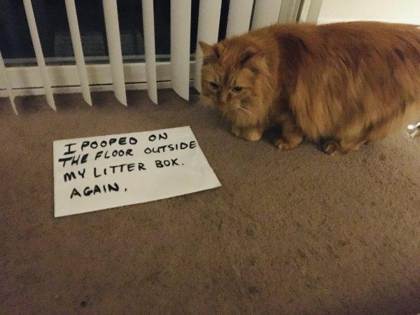 Animal Shaming (29 pics)