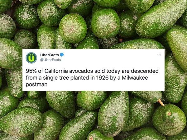 Interesting Facts (32 pics)