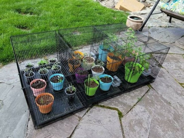 People Show Off Their Gardens And Plants (48 pics)