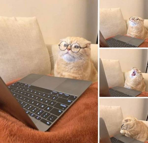 Hilarious Animals Memes And Pictures (57 pics)