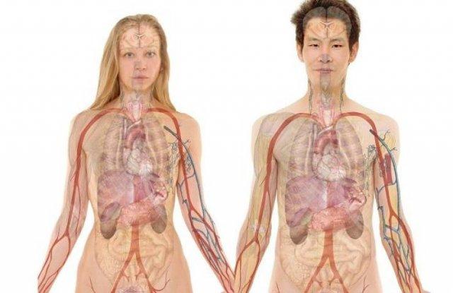 Human Body Wonders (17 pics)