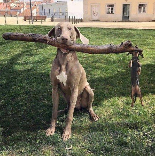 These Animals Are Broken (23 pics)