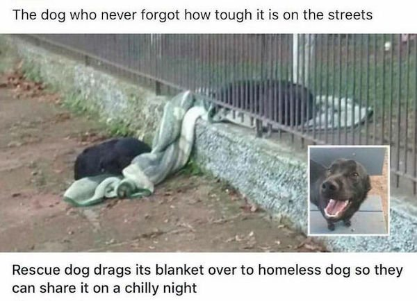 Wholesome Dog Stories (32 pics)