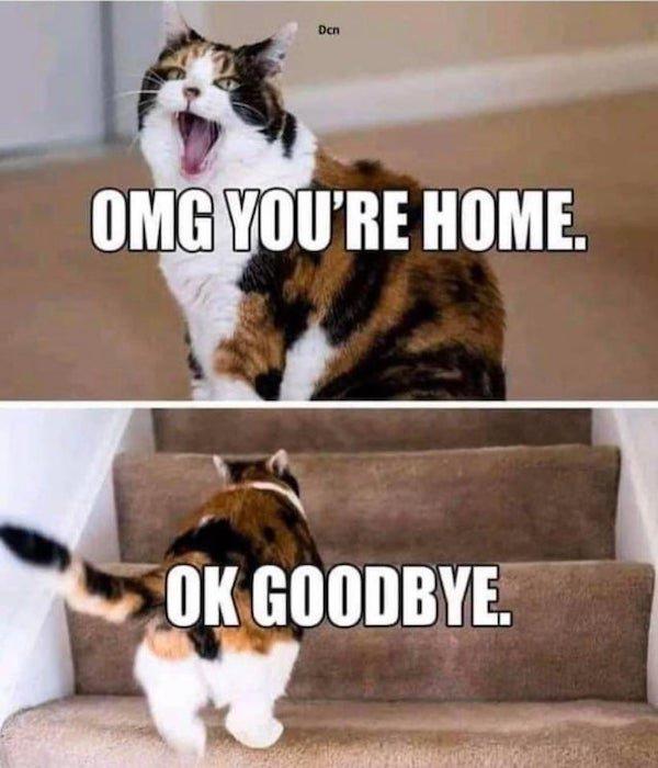 Cat Memes (32 pics)