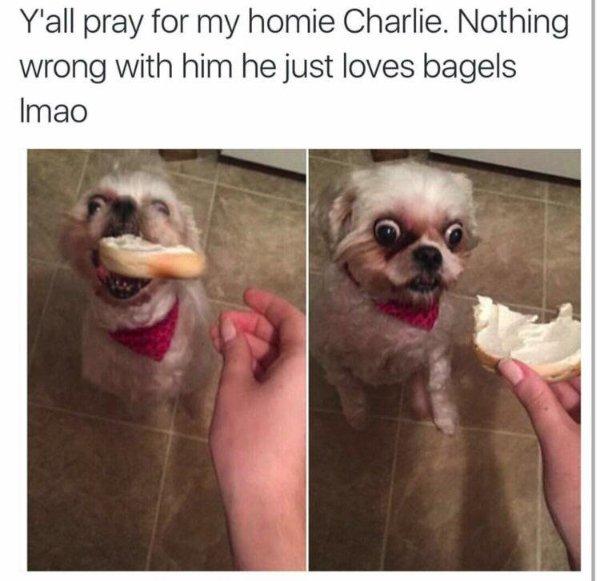 Random Funny Memes (27 pics)