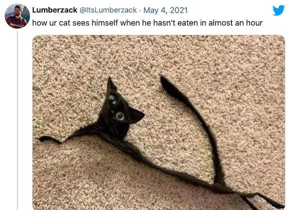 Pet Memes (38 pics)