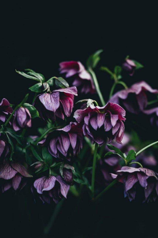 Beautiful Plants (50 pics)