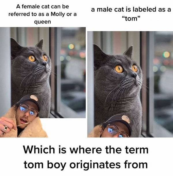 Facts About Cats (32 pics)