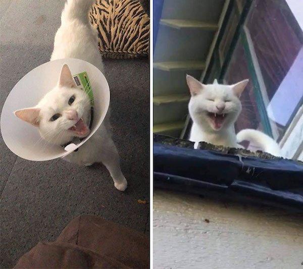 Screaming Cats (30 pics)