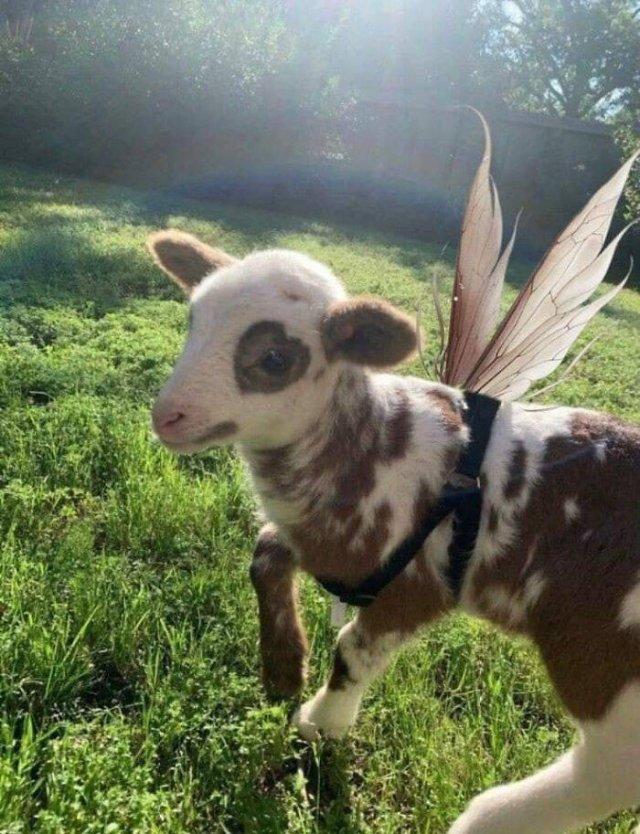 Cute Animals (47 pics)