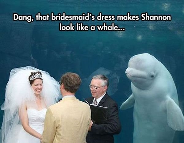 Memes About Wedding Day (30 pics)