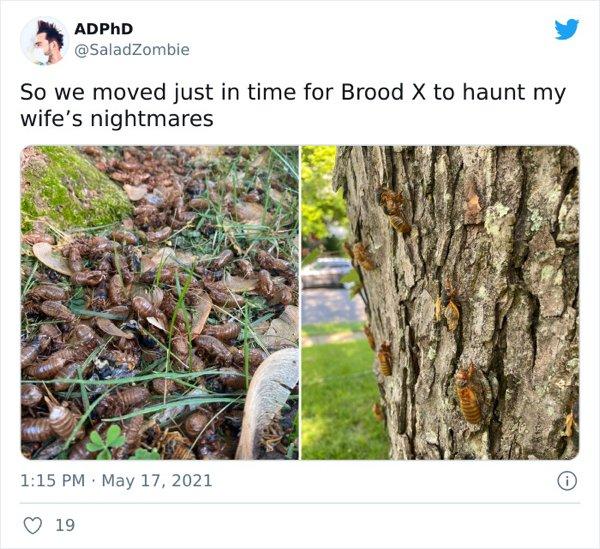 Cicadas Invasion (30 pics)