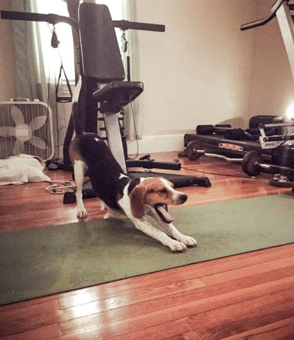 Pets Also Have Morning Routines (20 pics)
