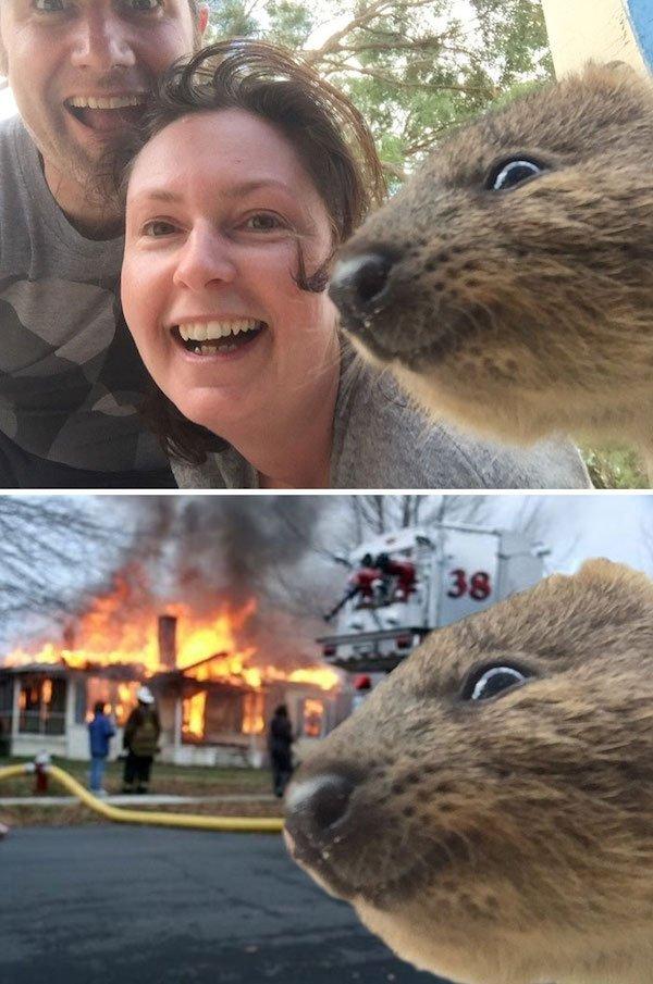 Funny Photoshop (38 pics)