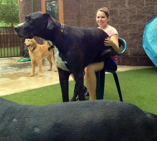 Giant Pets (20 pics)