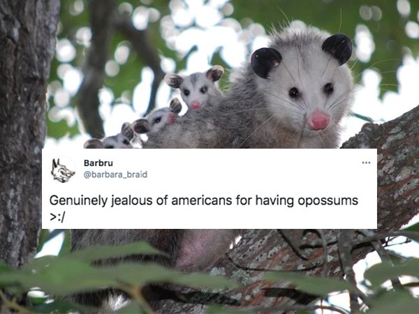 American Things That Make Entire World Feel Jealous (28 pics)