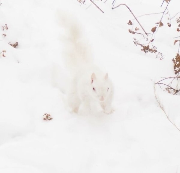 Funny Wildlife Photos (32 pics)