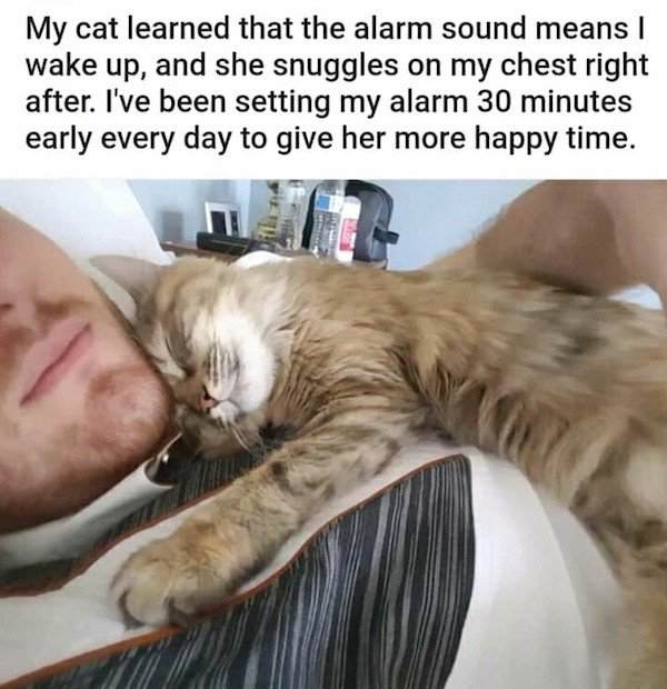 Wholesome Stories (29 pics)