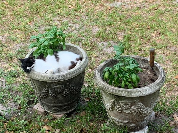 Hilarious Cats (25 pics)