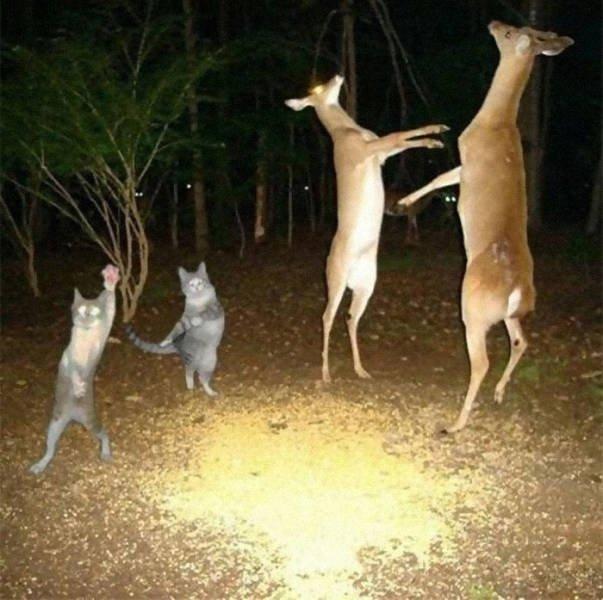 Funny Animal Photos (49 pics)