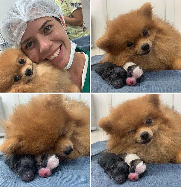 Cute Puppies (35 pics)