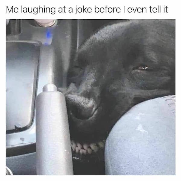 Dog Memes (30 pics)