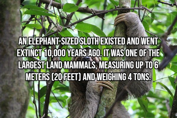 Interesting Facts (22 pics)
