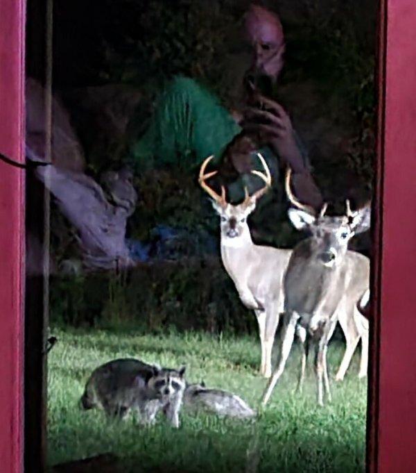 Funny Wildlife Photography (33 pics)