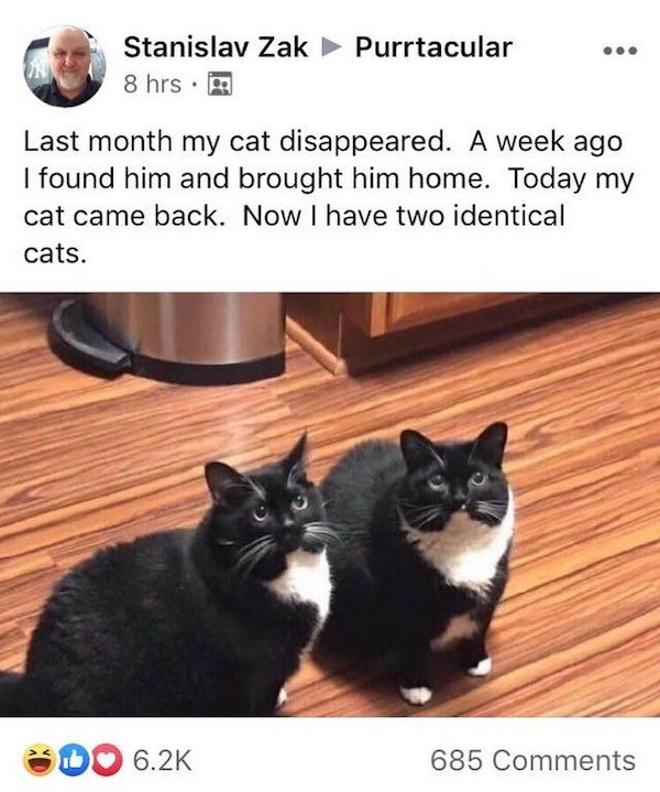 Wholesome Stories (24 pics)