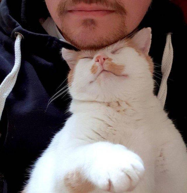 Cute Pets (25 pics)