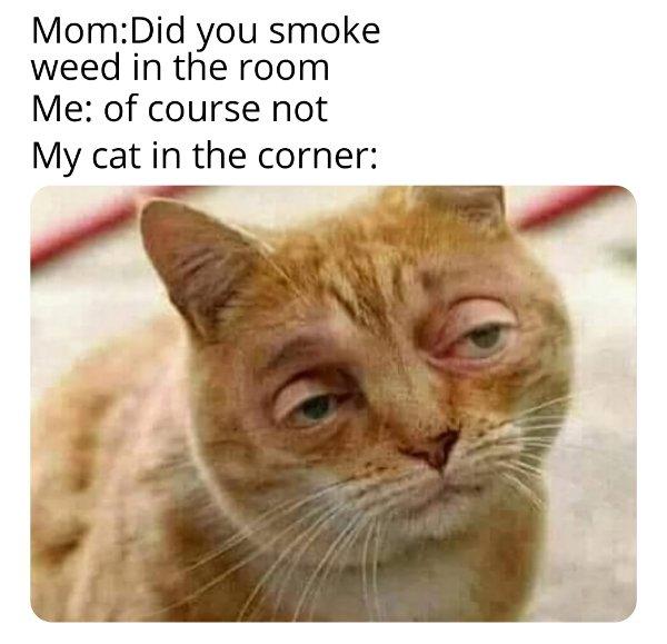 Internet Humor (23 pics)